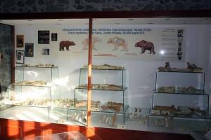 mouseio-fysikis-istorias-aridaias2