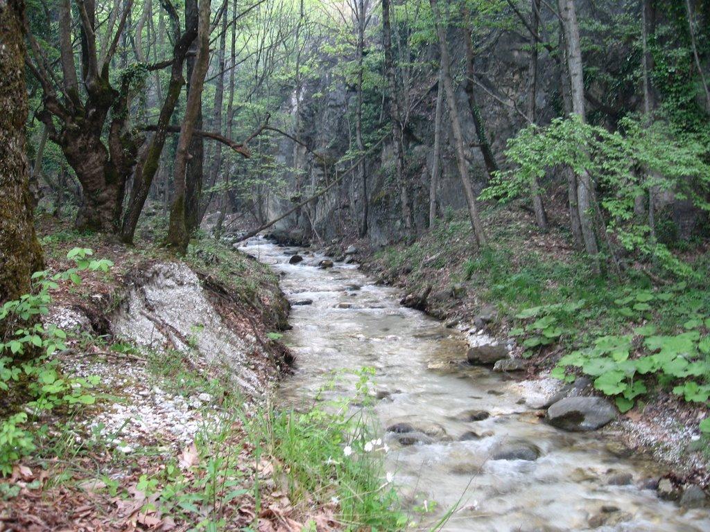 Μαύρο Δάσος στην Όρμα Λουτρά Πόζαρ ξενοδοχεία